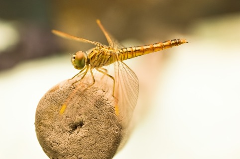dragon-fly-436754_1280