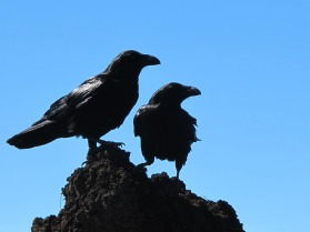birds-433965_1280