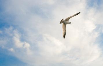 seagull-491658_1280
