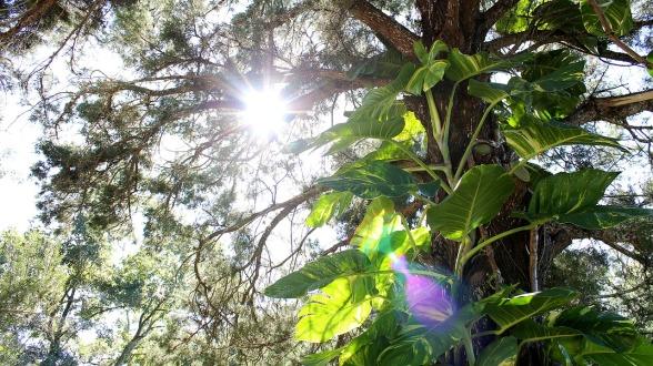 tree-494041_1280